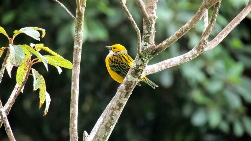 6, Birdwatching Tour
