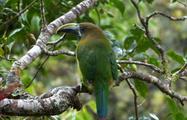 7, Birdwatching Tour