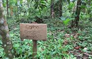 1, Bonyik: Infinite Adventure in Jungles and Rivers to Discover