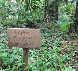 Bonyik: Aventura Infinita en Selvas y Ríos por Descubrir