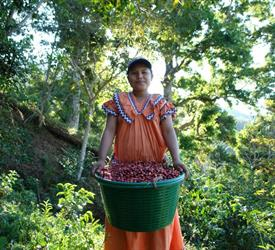 Boquete Coffee Tour, Food And Drink Tours in Panama