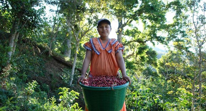 1, Boquete Coffee Experience