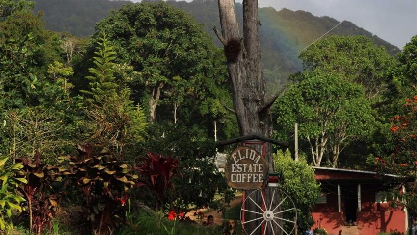 5, Boquete Coffee Experience