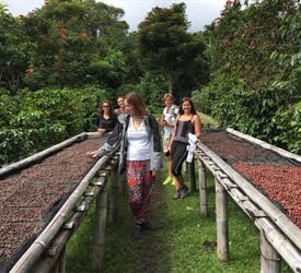 Boquete Coffee Tour
