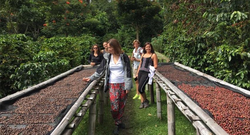 coffee plantations - tiqy, Boquete Coffee Tour