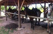 4, Horses & Hot Springs