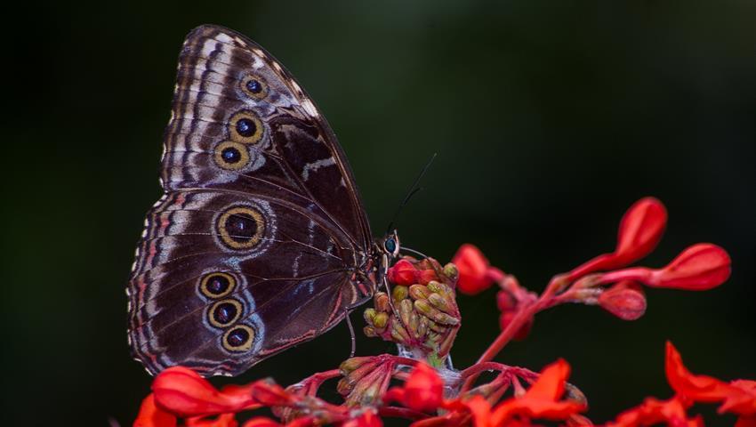 butterfly garden, Jardín de Mariposas