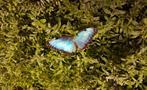 butterfly garden, Butterfly Garden