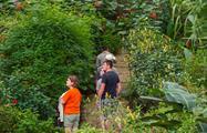butterfly garden tourist, Butterfly Garden