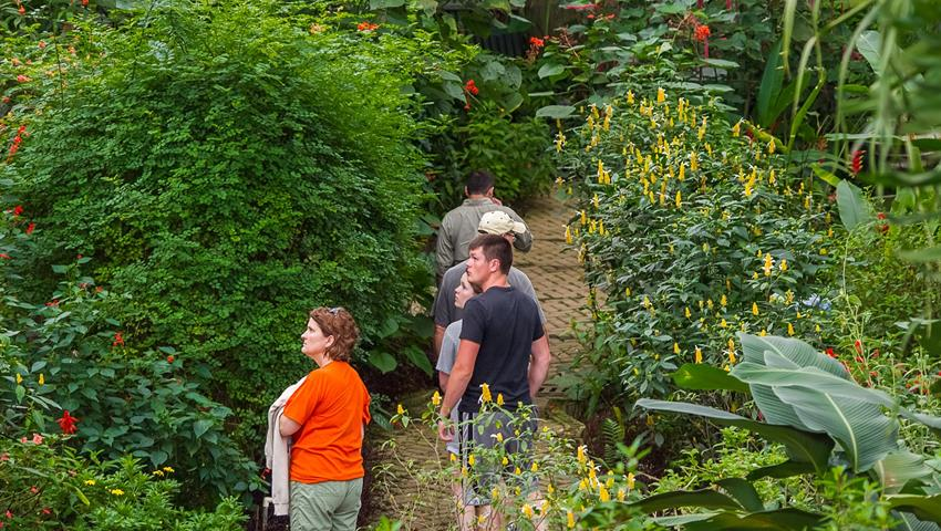 butterfly garden tourist, Jardín de Mariposas