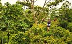 Canopy tour carbon fiber cable, Jungle Experience with Canopy Tour