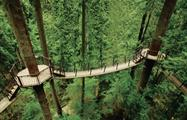 Suspension Bridge, Puente colgante de Capilano y Grouse Mountain