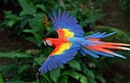 Bird, Carara National Park 6-Hour Tour