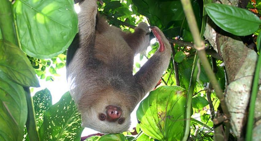sloth, Carara National Park 6-Hour Tour