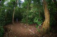 forest, Carara National Park 6-Hour Tour
