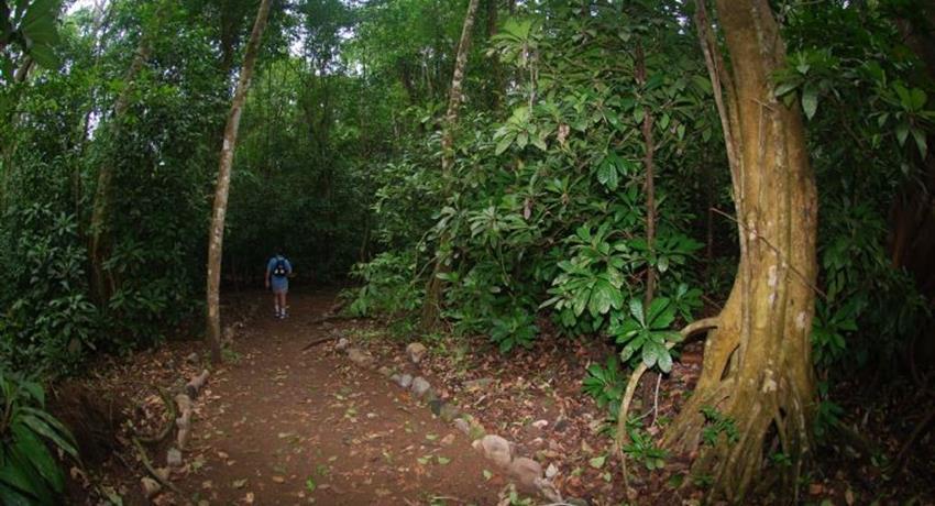 forest, Carara National Park 6-Hour Tour