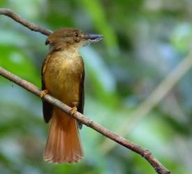 Tour de Medio Día al Parque Nacional Carara, Tours De Aventura en Jaco, Costa Rica