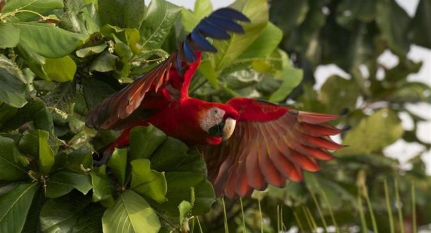 Guacamaya, Carara National Park Half Day Tour