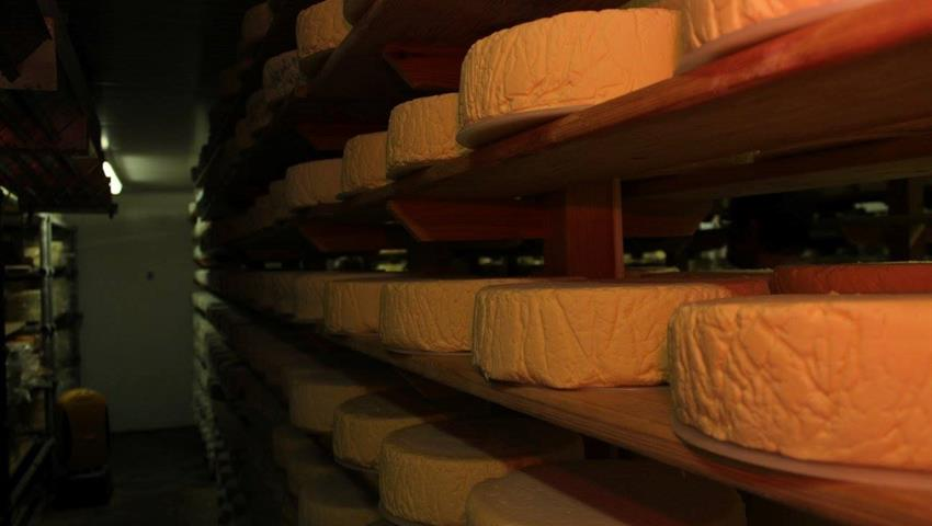 Cheese and Vineyard Tour with Great British 2, Cheese and Vineyard Tour