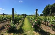Cheese and Vineyard Tour with Great British 7, Cheese and Vineyard Tour