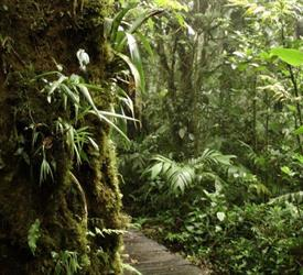 Cloud Forest National Park Full Day Tour