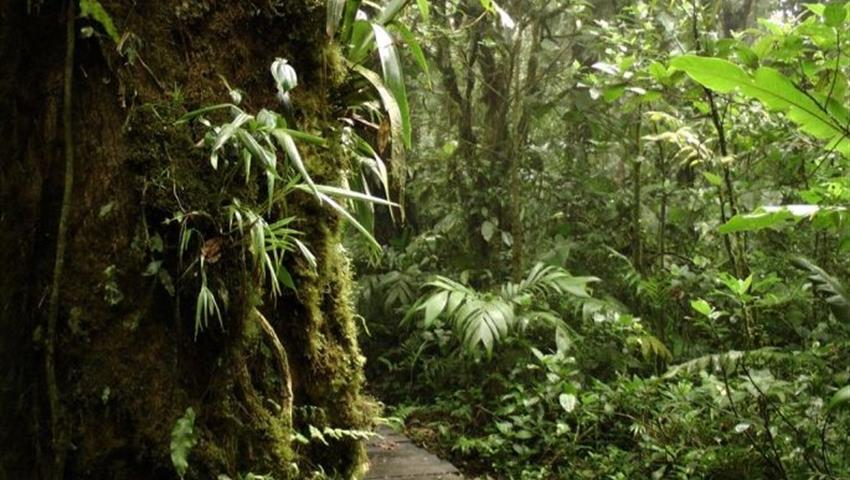 tree, Cloud Forest National Park Full Day Tour
