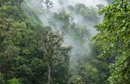 Cloud, Cloud Forest National Park Full Day Tour