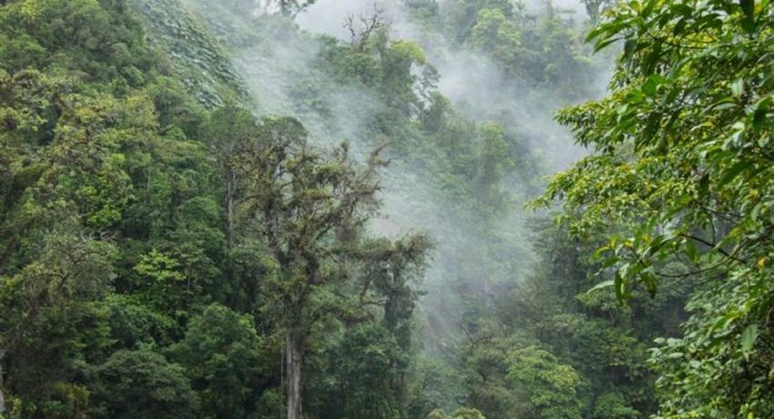 Cloud, Cloud Forest National Park Full Day Tour