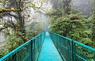 hanging bridge, Cloud Forest National Park Full Day Tour