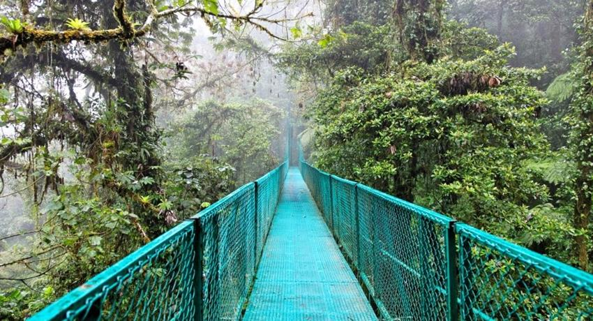 hanging bridge, Cloud Forest National Park Full Day Tour