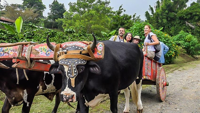 Bulls, Coffee, Chocolate and Sugar Cane Tour