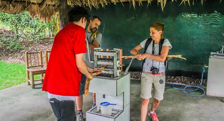 Grind, Coffee, Chocolate and Sugar Cane Tour