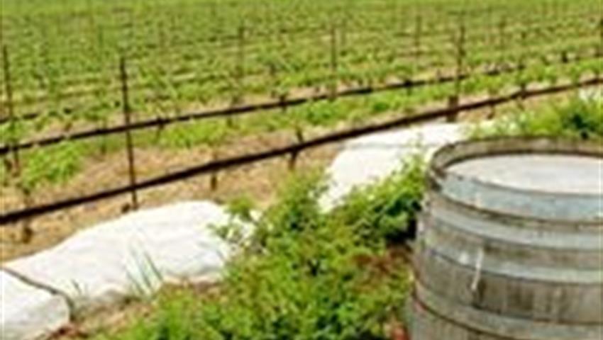 Vineyards, Vinos de Clima Frío del Niágara