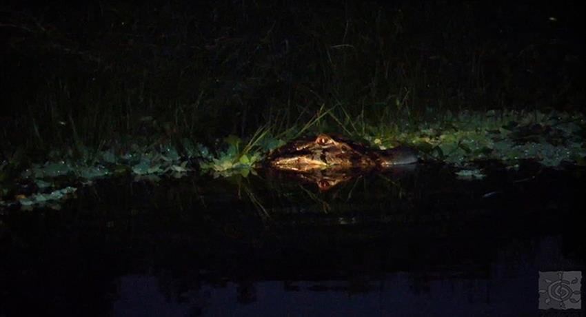 Crocodiles night watch tour, Crocodiles Night Watch
