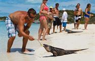 2, Iguana Island Snorkeling