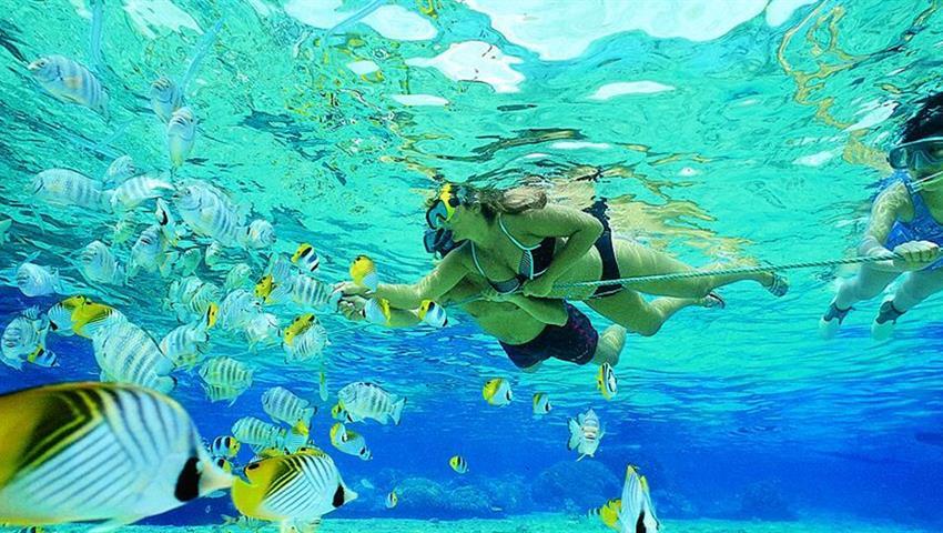 3, Iguana Island Snorkeling