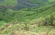 5, The Herrera Highlands Panama Eco Tour