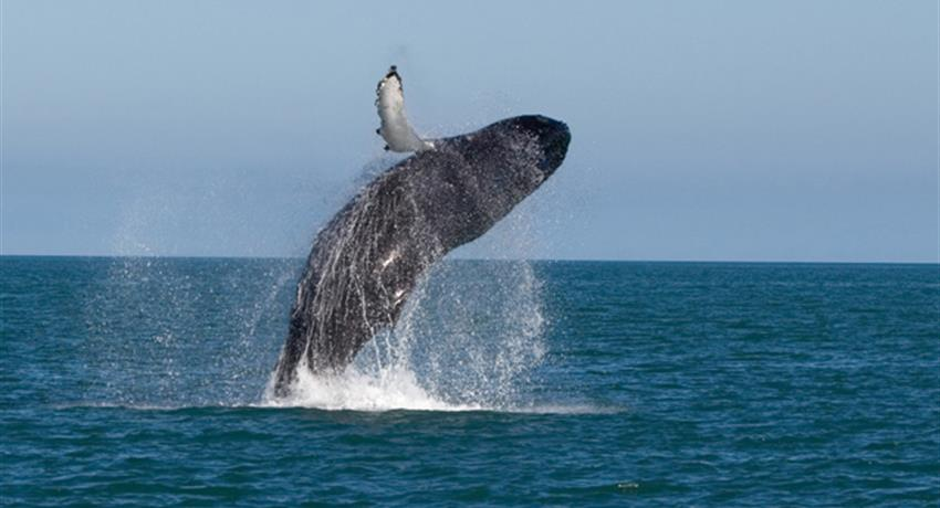 1, Whale Watching