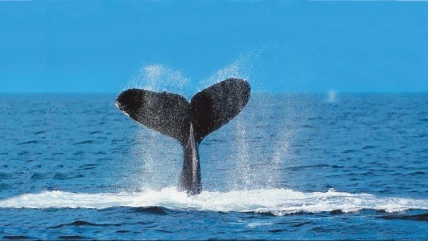 2, Whale Watching