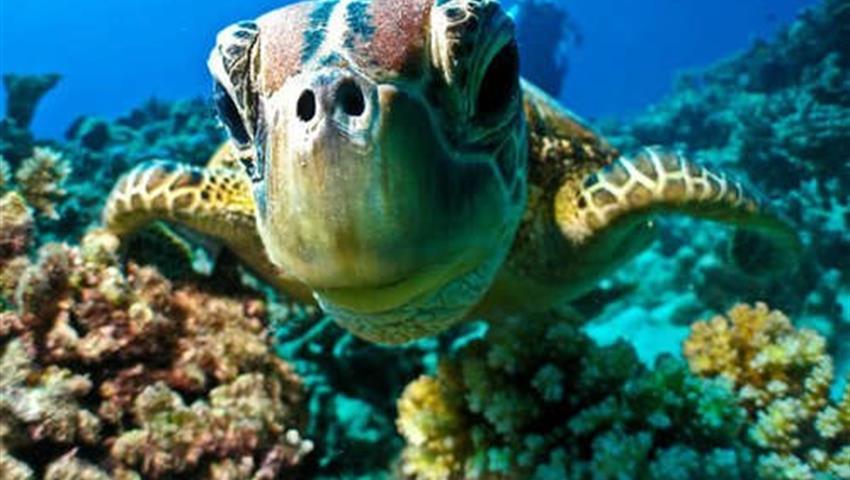 1, Turtles Snorkeling