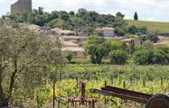 vineyard, Dinner in Châteauneuf du Pape