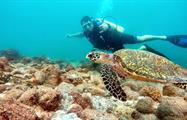 1, Clases de Buceo en Isla Coiba