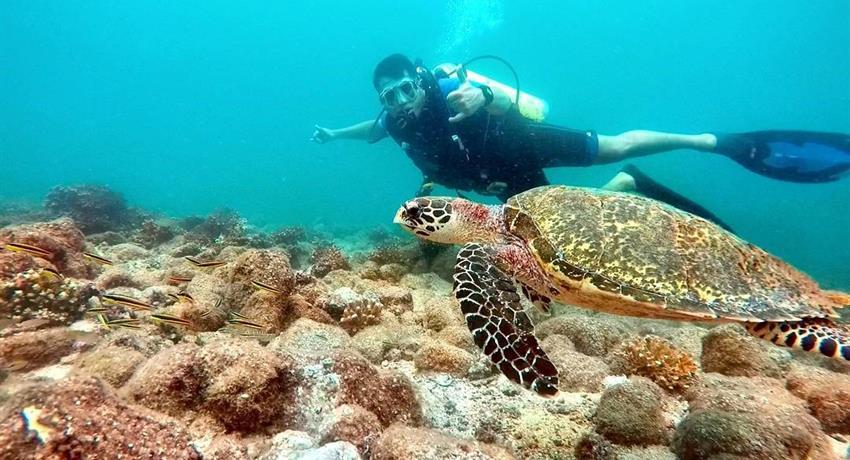 1, Discover Scuba Diving Course