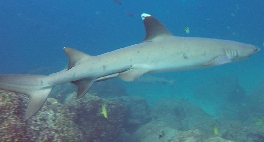 8, Discover Scuba Diving Course