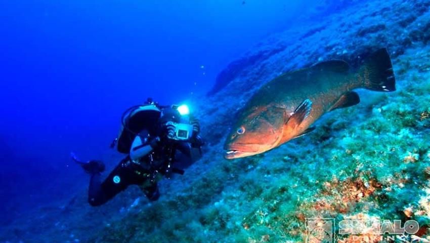 Diving, Dive Trip