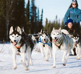 Dog Sledding Day Trip, Dog Sledding Tours in Alaska, United States