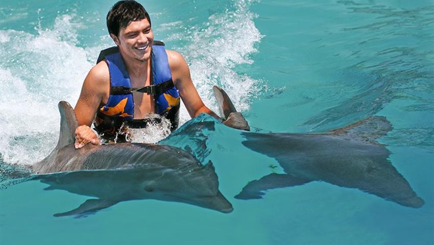 2, Dolphin Royal Swim at Dolphin Cove Ocho Rios