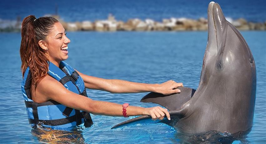 3, Dolphin Royal Swim at Dolphin Cove Ocho Rios