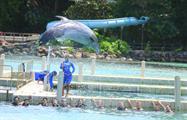 5, Dolphin Royal Swim at Dolphin Cove Ocho Rios