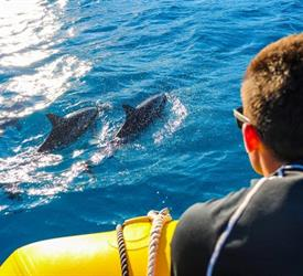 Dolphin Excursion, Water Activities in United States